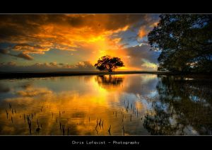 Daily Inspiration - Page 2 Gold-tree